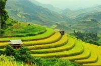 voyages de noces: vietnam fascinant, decouverte des rizieres en terrasse a sapa
